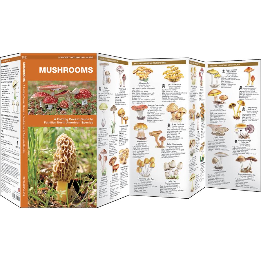 Mushroom Identification Chart Heartpulsar