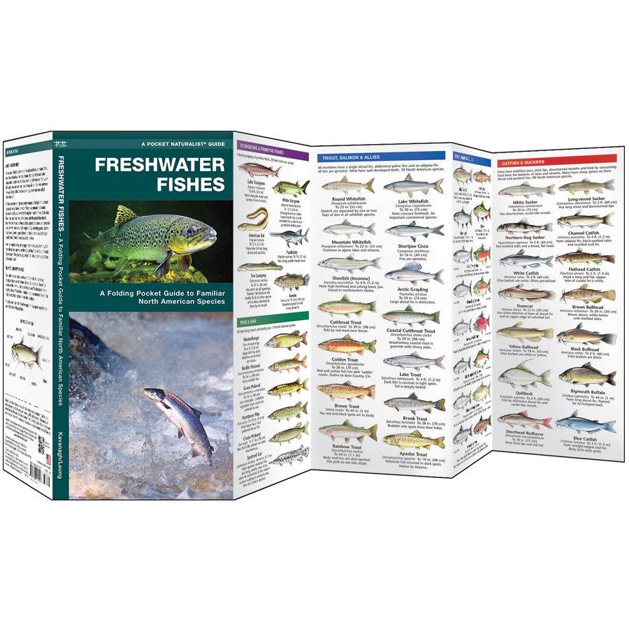 Freshwater Fish of North America | RailRiders