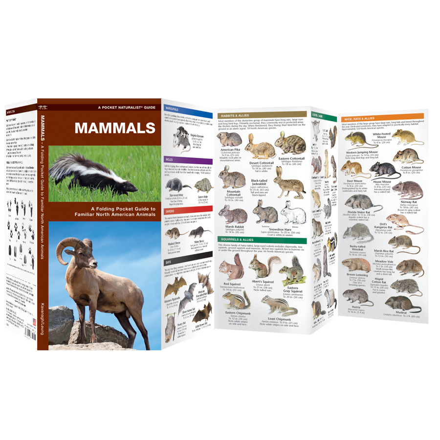 Field Guides: A Field Guide To North American Mammals