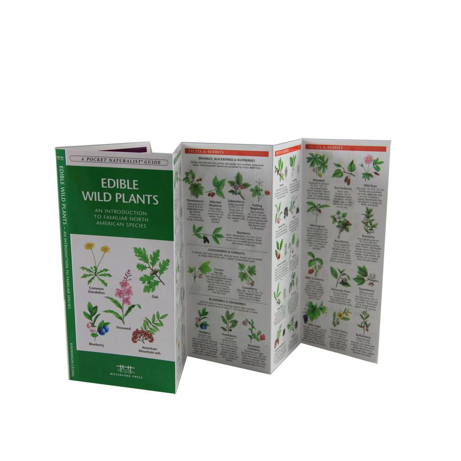 Amazon.com: field guide edible wild plants: Books