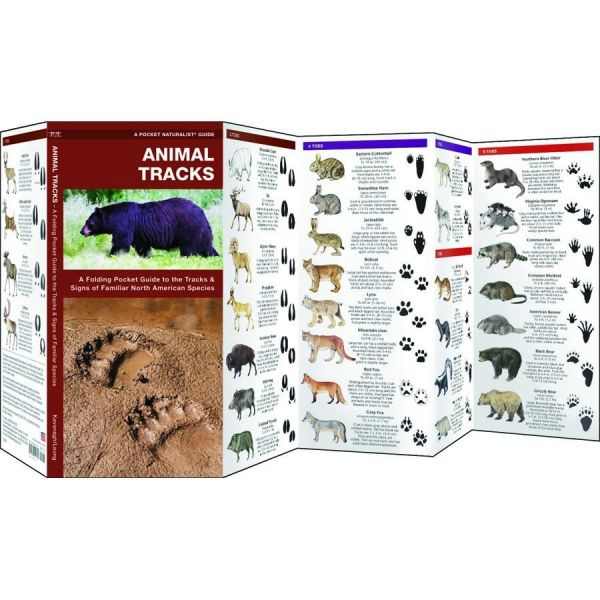 Wild Animal Tracks Guide