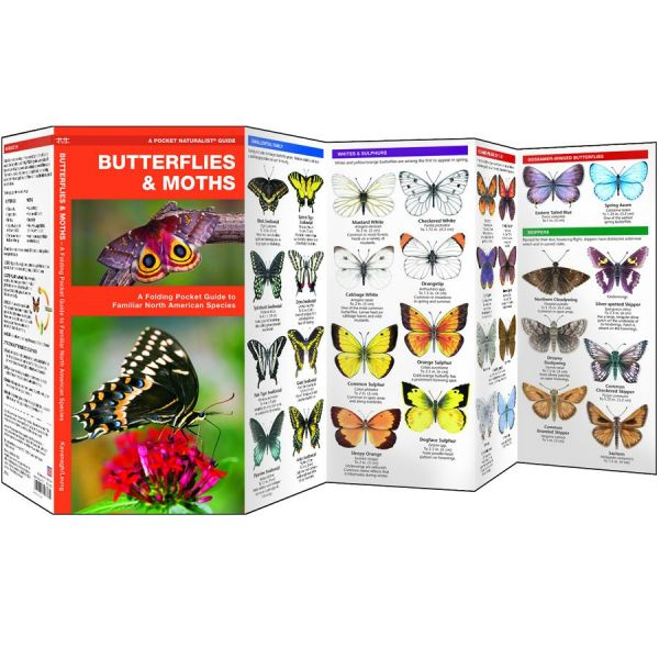 Butterflies and Moths of North America